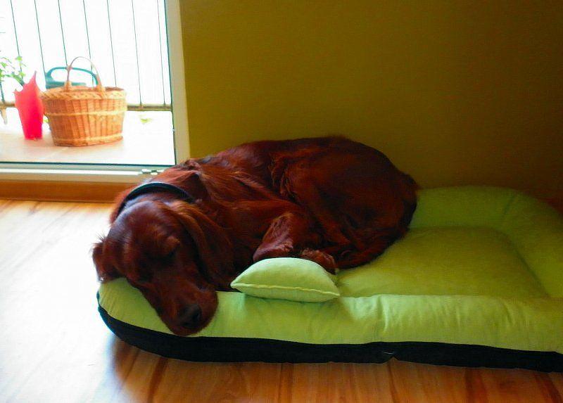 legowisko dla psa